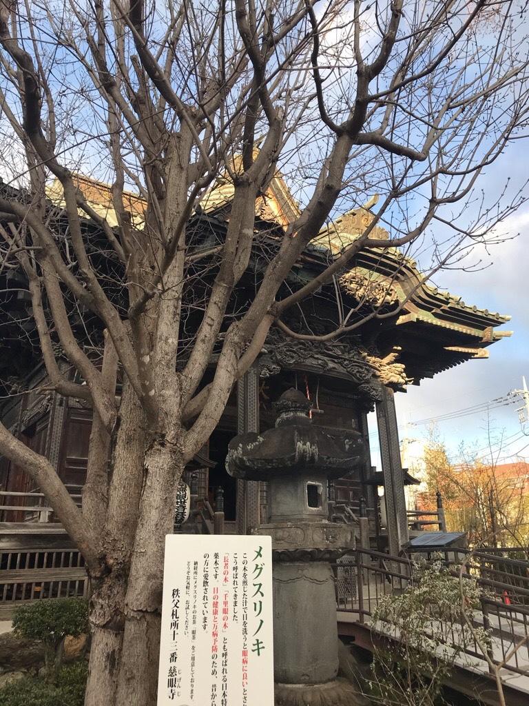 慈眼寺とメグスリノキ