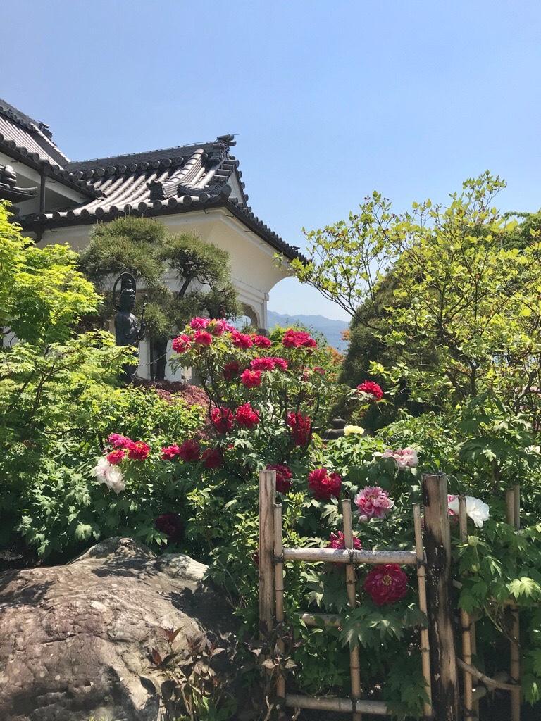 少林寺の牡丹