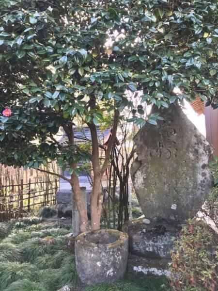 菊水寺の菊塚